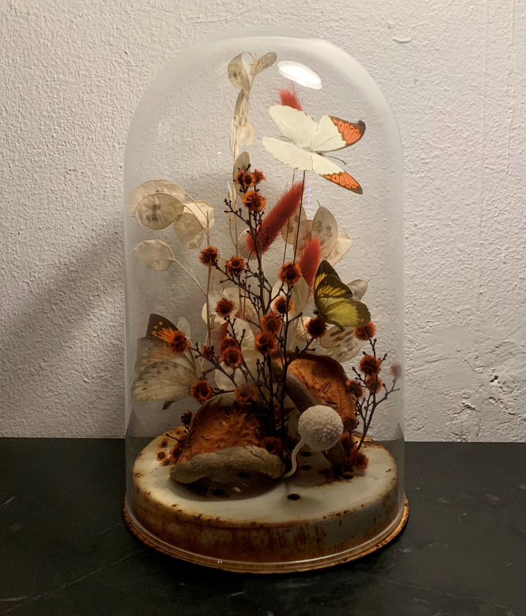Taylor Dale's winning Sibella Court Interior Design Scholarship submission - a cloche vignette of a butterfly in nature.